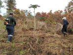 Restorasi Hutan, Pengertian dan Manfaatnya